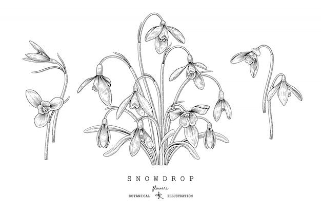 花の装飾セットをスケッチします。スノードロップの花の絵