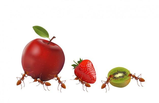さまざまな果物を運ぶアリ