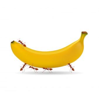 アリとバナナのベクトルが白い背景で隔離。