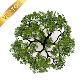 木、風景、ベクトル、イラスト