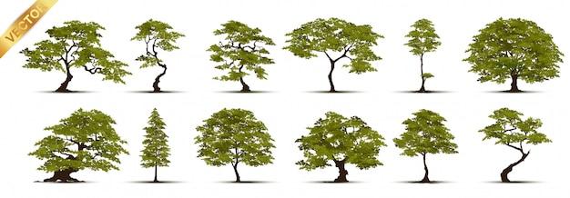 木のコレクション