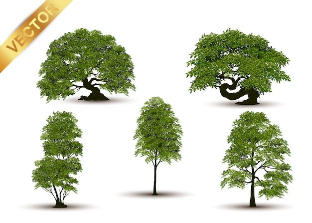 美しい木の背景に現実的です。