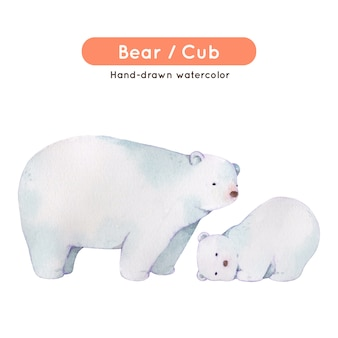 Акварельный рисунок белого медведя