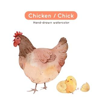 鶏の水彩イラスト