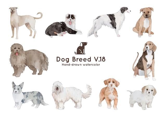 犬の品種の水彩イラスト