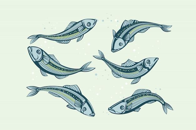 Набор сардины. иллюстрация рыбы
