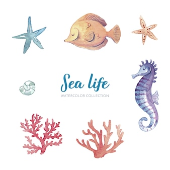海洋生物の水彩コレクション