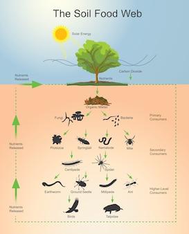 土壌食物のウェブと動物のサイクル