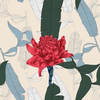 Бесшовные цветочные с факелом имбиря цветы на изолированных фоне