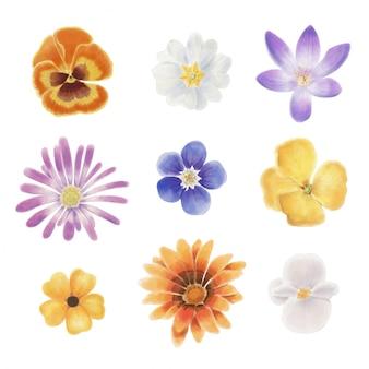 空白の背景に分離された水彩画の春の花