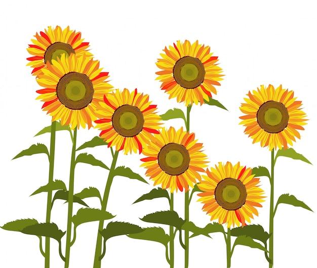 太陽の花のベクトル。