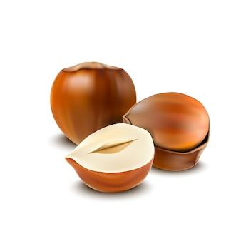 Реалистичные лещинные орехи, изолированных на белом фоне