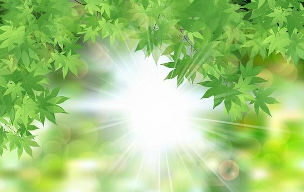 夏の新鮮な葉緑色の太陽の葉