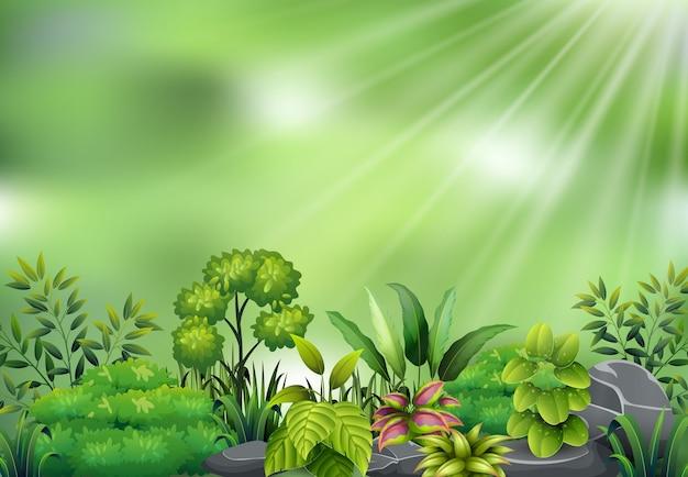 Вид ботанического растения на солнечный свет