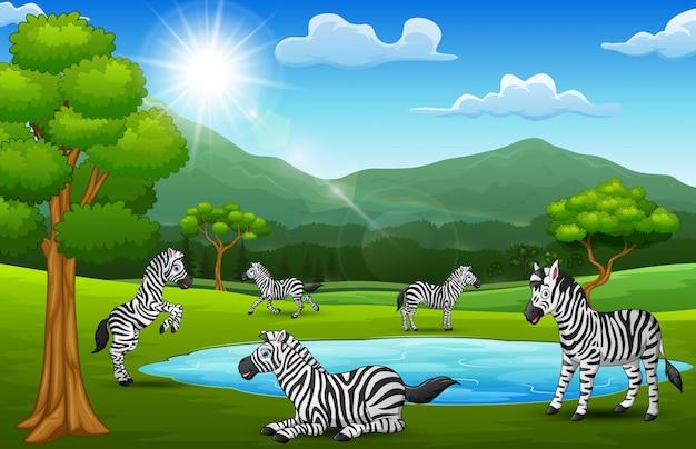 Зебры наслаждаются природой в красивых полях