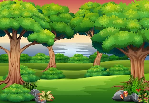 自然の風景と森の背景