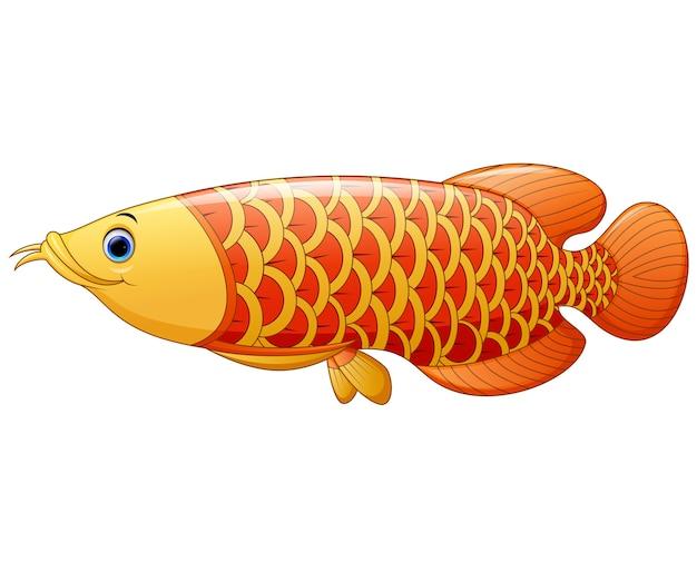 アロワナ魚