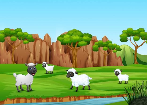 フィールドで遊んでいる羊のグループ