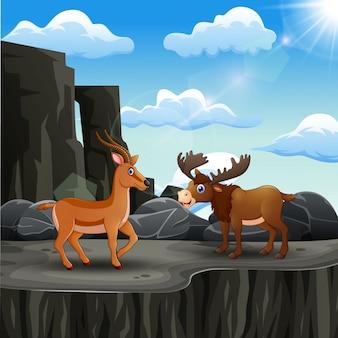 崖の端にムースと鹿