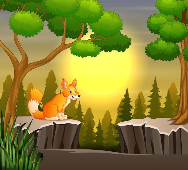夕暮れ時の崖の上に座っているキツネ