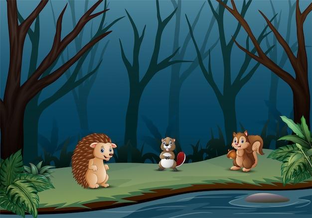 乾燥した森の中で生きる野生動物
