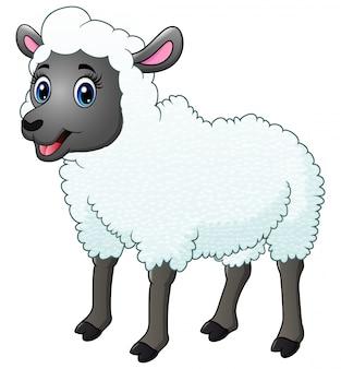 白で隔離される美しい羊