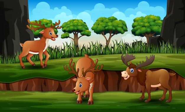 緑の自然の中でムースと漫画トナカイ