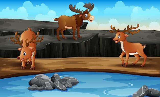 Сцена со многими оленями в открытом зоопарке