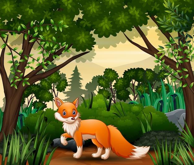 Лиса ищет добычу на лесной сцене