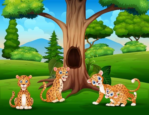 Семья леопардов, живущая в джунглях