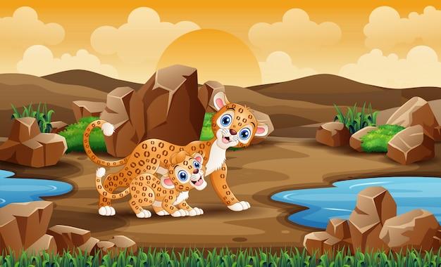 砂漠のフィールドで母ヒョウとカブのヒョウ