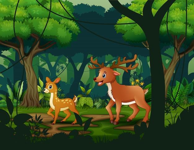 Семья диких северных оленей в тропическом лесу