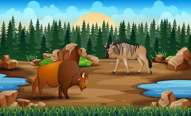 Мультяшные животные на суше