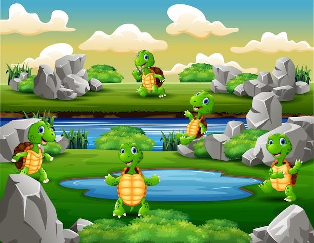 Группа черепах играет возле водопоя