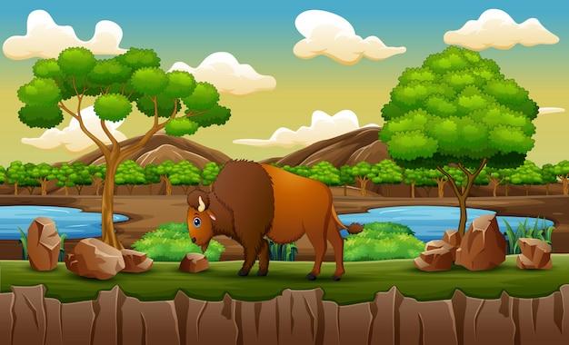 動物園の公園で水牛と自然シーン