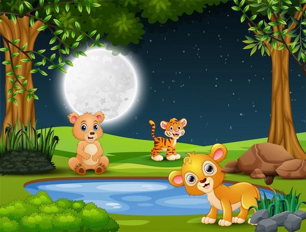 夜に小さな池で遊ぶ動物の赤ちゃん