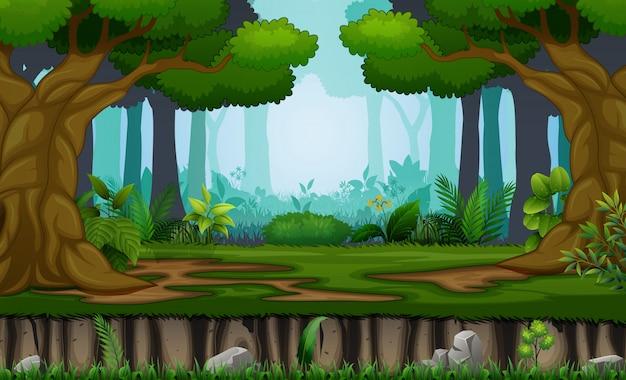 森の背景に多くの木