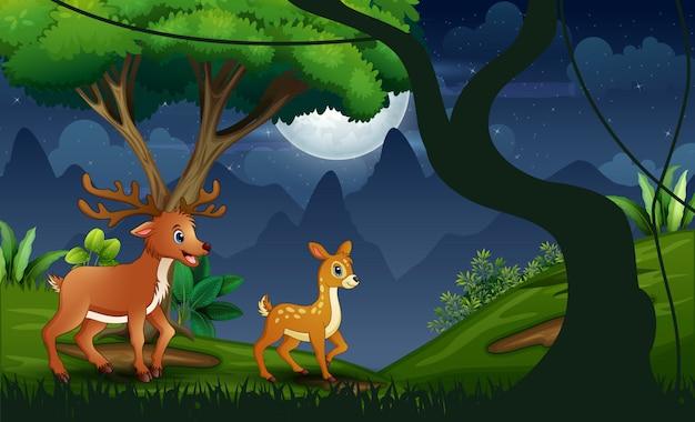Ночной лес с матерью оленем и ее детенышем