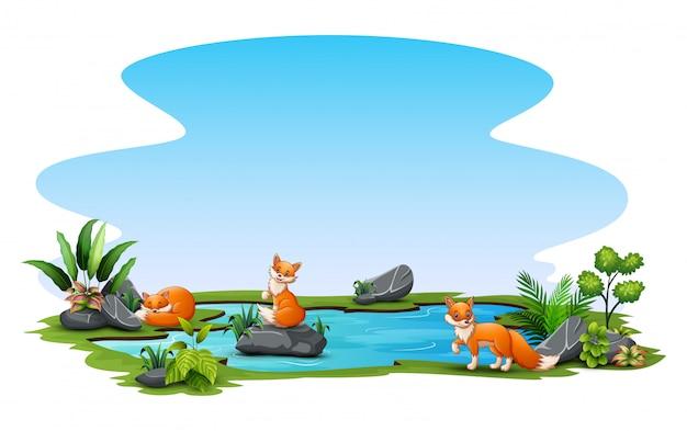 小さな池で遊ぶ三匹のキツネ