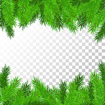 透明で分離された松の枝