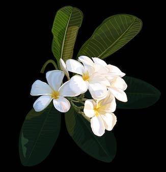 プルメリアの花のベクトルイラストレーター