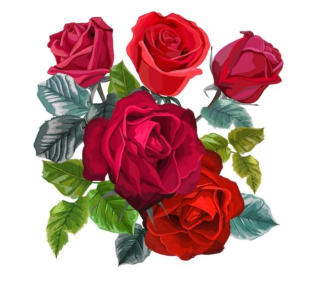 白地に赤いバラの花