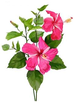 白い背景上に分離されてピンクの熱帯の花