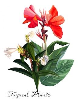 カンナユリの花 - ベクトル