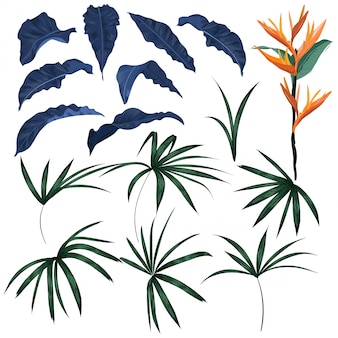 熱帯の葉とエキゾチックな植物のベクトルのセット