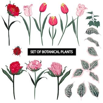 Набор летних тюльпановых цветов