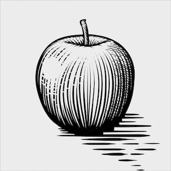 Гравированная иллюстрация яблока