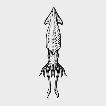 ビンテージイカの描画。手描きモノクロシーフードイラスト