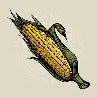 トウモロコシの穂軸のヴィンテージには、図が刻まれています。植物性トウモロコシ。ベクトル図