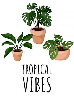 Тропическая открытка. листовка с горшечными суккулентными растениями. уютный лагом в скандинавском стиле